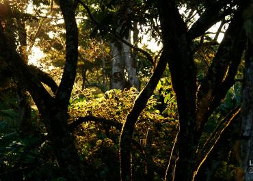 Una vida perfecta en la selva Maya